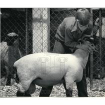 1984 Press Photo Greg Vitler of Hartland got his sheep into position for judging