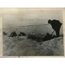 1922 Press Photo Saskatchewan farmer digging through snow get to harvest
