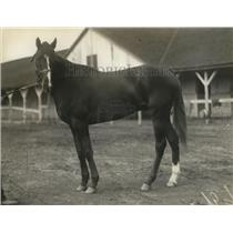 1921 Press Photo Racehorse Firebrand at a tracks stable area - net25498