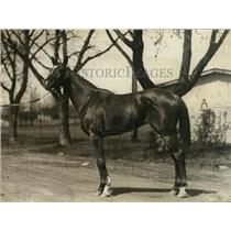 1921 Press Photo Racehorse Muscullonge at a tracks stable area - net25499