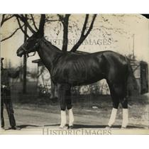1921 Press Photo Racing horse Fantoche shown with his handler - net28440