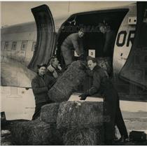 1949 Press Photo Livestock Airlift - orb81841