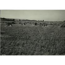 1928 Press Photo Farming Scene - spx10245