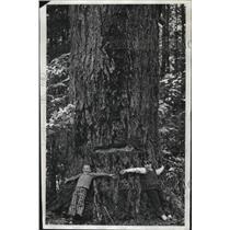 1972 Press Photo School children surround the big fir tree during outdoor school