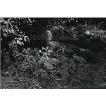 1988 Press Photo Janet Lahl Chairwoman of a Milwaukee Art Museum Herb Garden