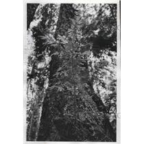 1977 Press Photo Whidbey Island - fux01019