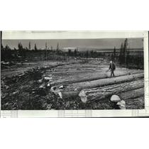 1976 Press Photo Logs decked in rows to reduce soil compaction that blocks air