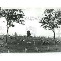 1977 Press Photo Flags placed above the graves in Willamette National Cemetery