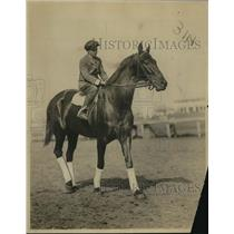 1919 Press Photo Racehorse Eternal ready for a race - net30080