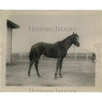 1920 Press Photo Racehorse Carmandale of stables of RF Carman in DC - net33986