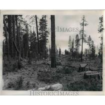 1971 Press Photo Klamath Indian Reservation timber was cut and resulted in scene