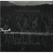1947 Press Photo Tussock Moth Airplane Flying Over Forest - spx16931