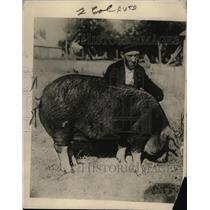 1919 Press Photo William Stuart with Champion Sow Hog of Weiser, Idaho