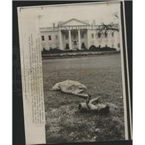 1973 Press Photo Christmas Day Demonstrate White House - RRY46397
