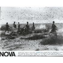1981 Press Photo Locusts, called the teeth of wind in a War without end-NOVA