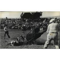 1936 Press Photo Rodeo Scene - Pendleton Round-up - spx17736