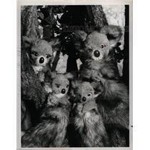 1972 Press Photo Koala Paul Mary Ritts Puppetters NCB - RRX65253