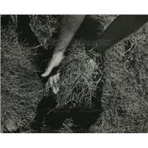 "1961 Press Photo Alabama-Birmingham-Legion Field-""Poisoned"" soil shown here."