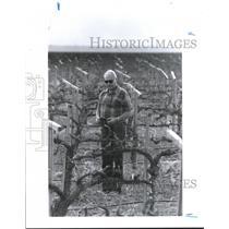 1991 Press Photo Grape field Farmer Howard Frick, of Kern County, California