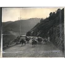 1937 Press Photo Heavily packed Burros and a man on a road in Mexico - mjx37837