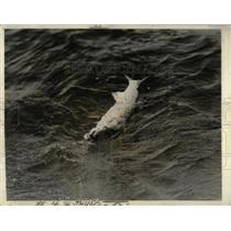 1932 Press Photo Baracuda Tussle haulcveld Fighter Deep
