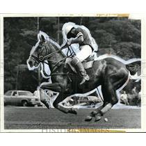 1979 Press Photo Beaver Valley Polo horseman - cvb50681