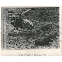 1964 Press Photo Nairobi Kenya Warden Nick carter Game - RRX82571