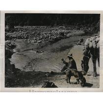 1940 Press Photo Shepherd tending his sheep flock inn New Zealand - nem57235