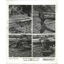 1968 Press Photo A Great horned owl tangling with a rattle snake in Disney movie