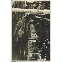 Press Photo Landscape Isle of Pines Cuba - RRX91351