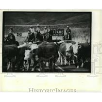 1981 Press Photo Wyoming-Idaho Border Cattle Drive - mjb54917