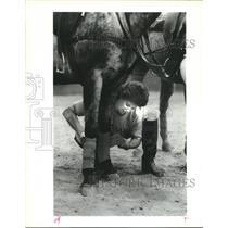 1990 Press Photo Joyce Murphy Wraps Horse's Legs Before Polo Practice, Houston