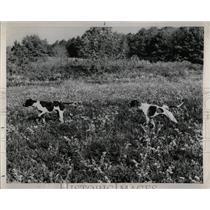 1953 Press Photo Pinehurst Quail Season Arnold Jackson - RRW88519