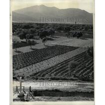 1938 Press Photo Agricultural Field Greece - RRX70823