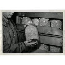 1961 Press Photo Mushroom Spawn - RRW70405