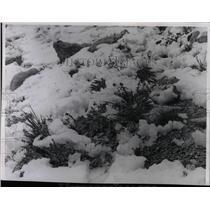 1965 Press Photo Mt. Evans Colorado scene - RRX63185