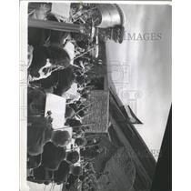1941 Press Photo Horace E. Tureman Conducting - RRX93751