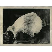 1925 Press Photo Plasticine Skull Discovery Tabatha - RRX79325