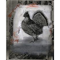 1924 Press Photo Bird Feather Wing Bipedal Endothermic - RRX60367