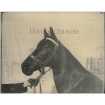 1928 Press Photo One Lulu Longo Horse - RRX44331