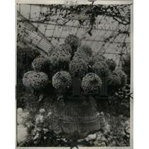 1924 Press Photo Garden of Flowers - RRX31097