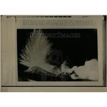 1971 Press Photo Sicily's Mt. Etna Erupts - RRX79257