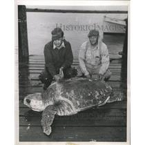 1953 Press Photo Captain Jim Beebe loggerhead turtle - RRW34235