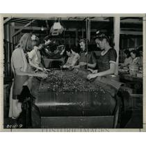 1946 Press Photo Strawberries on TVA Experimental Barge