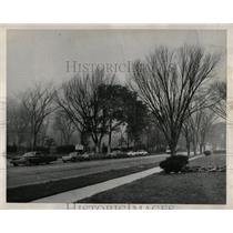1968 Press Photo Irving park Schiller Dutch Line Trees - RRW93213