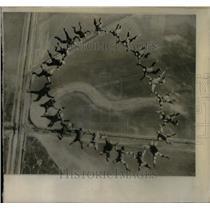 1972 Press Photo 24 skydivers star airplane California - RRX15339
