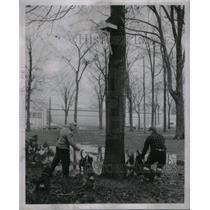1950 Press Photo Coon Hunt Racoon - RRX50149