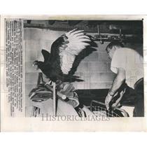 1964 Press Photo John Seney and Leonard the Buzzard - RRV75661