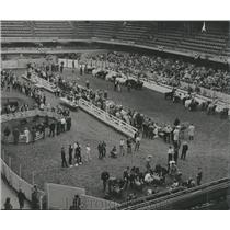 1965 Press Photo Stock Show Animals Sports