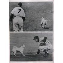 1953 Press Photo Brooklyn New York Ebbets Field NY Giants Roy Campanella
